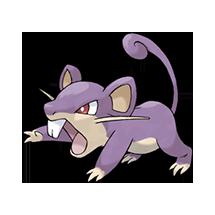 Rattata imagen